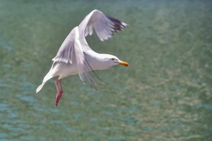 Смотреть красивое фото чайка смотрит в даль