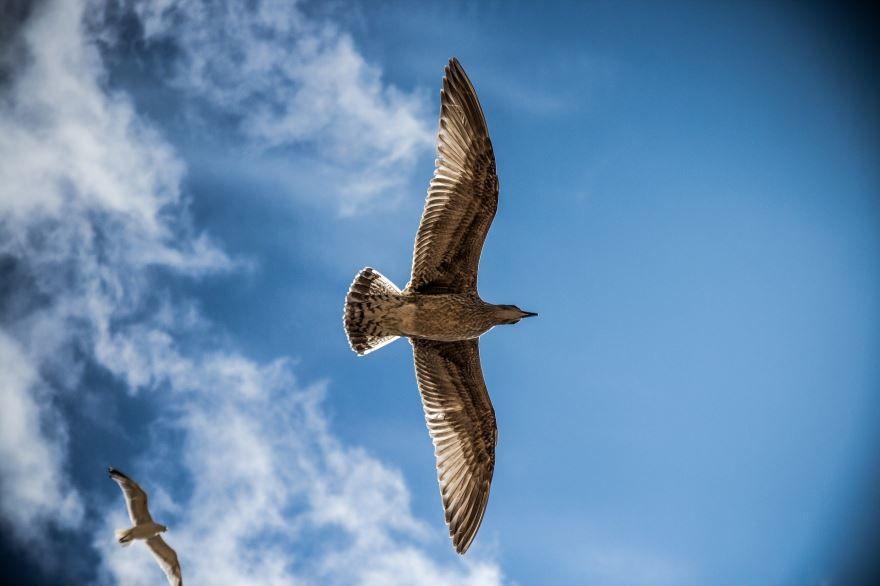 Смотреть необычную картинку чайки