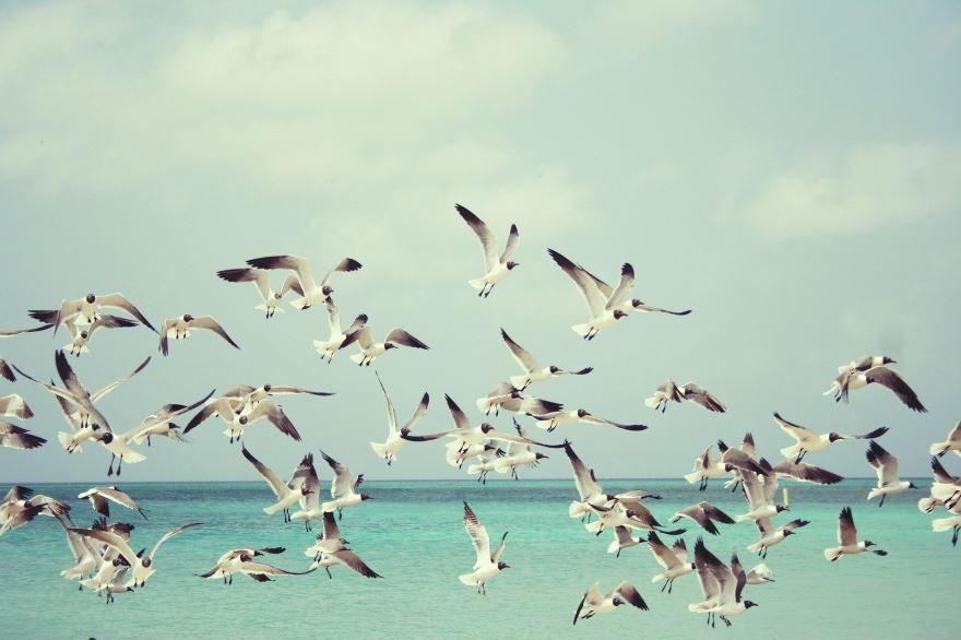 Смотреть красивую картинку две чайки отдыхают