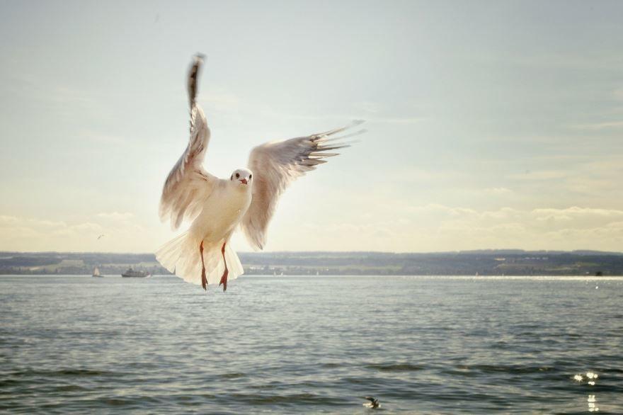 Смотреть интересное фото чайка приземляется на воду