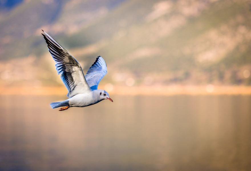 Смотреть красивую картинку чайка на природе