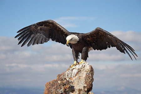 Скачать онлайн бесплатно красивое фото ястреба