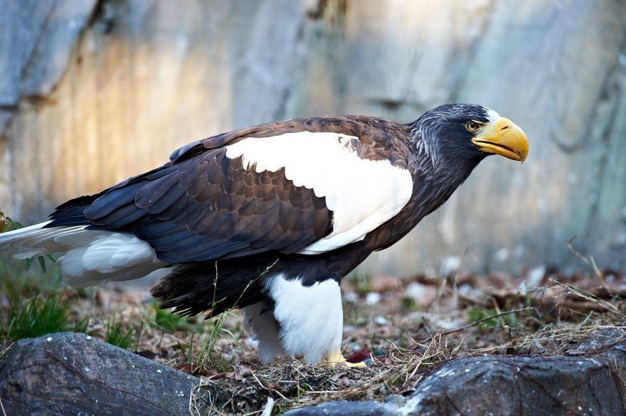 Скачать бесплатно красивую картинку птицы кондор