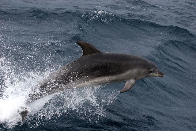 Смотреть фото красивого, большого кита