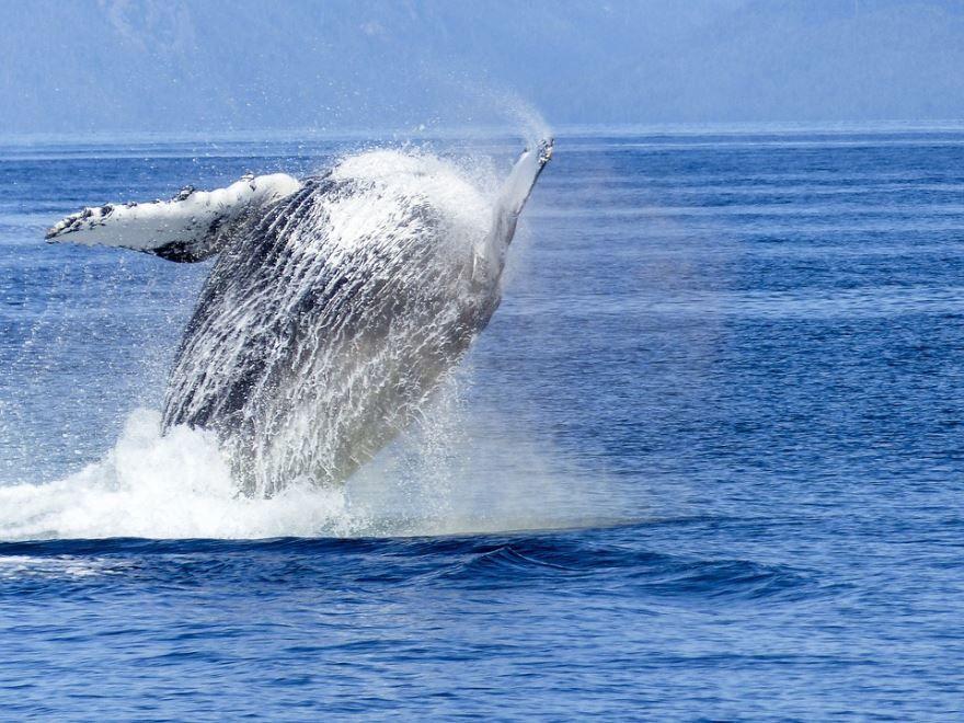 Смотреть оригинальное фото кита над водой