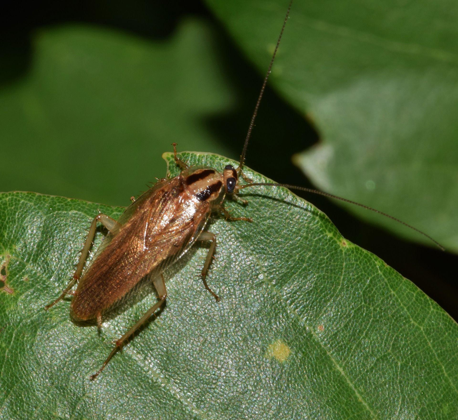 Фото тараканов различных разновидностей