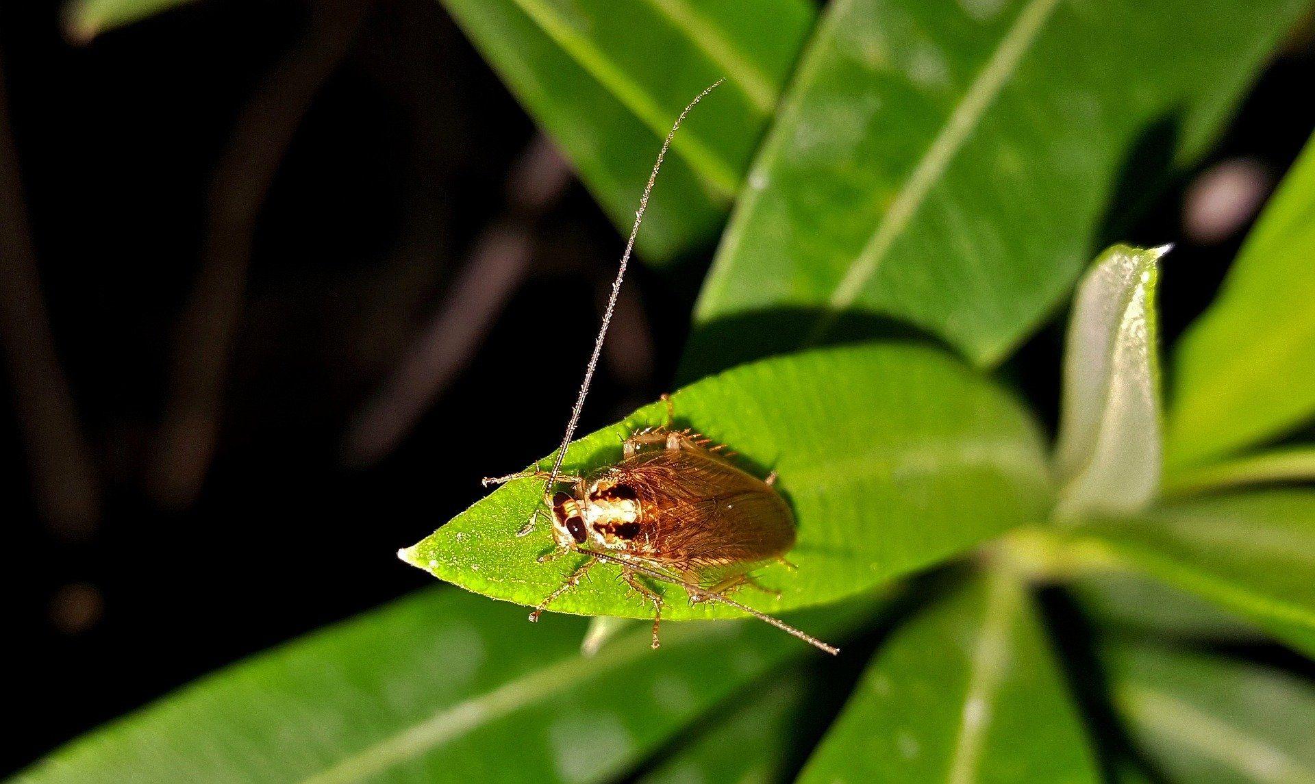 Борьба с домашними тараканами, смотреть фото