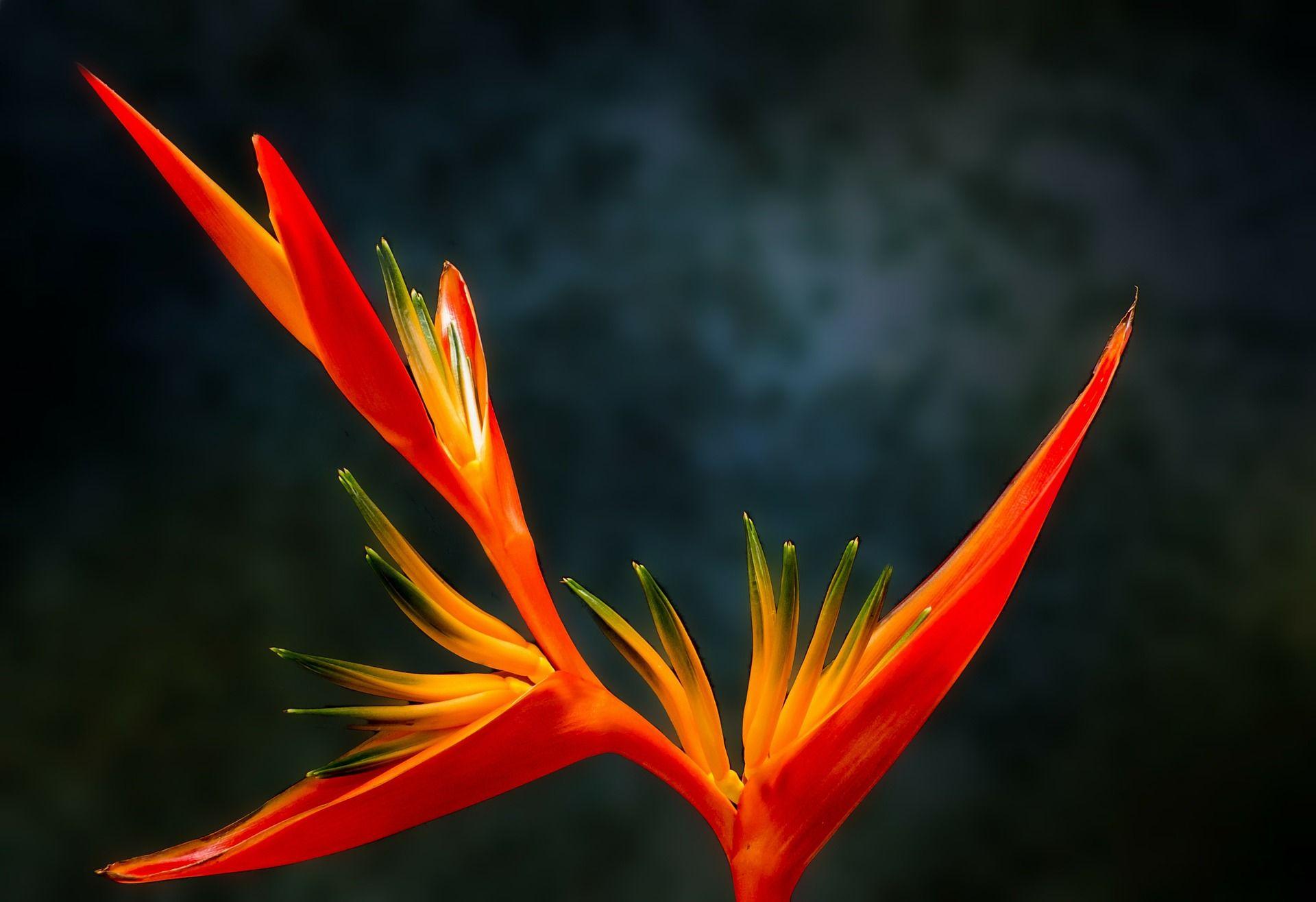 Фото райской птицы из города Самара