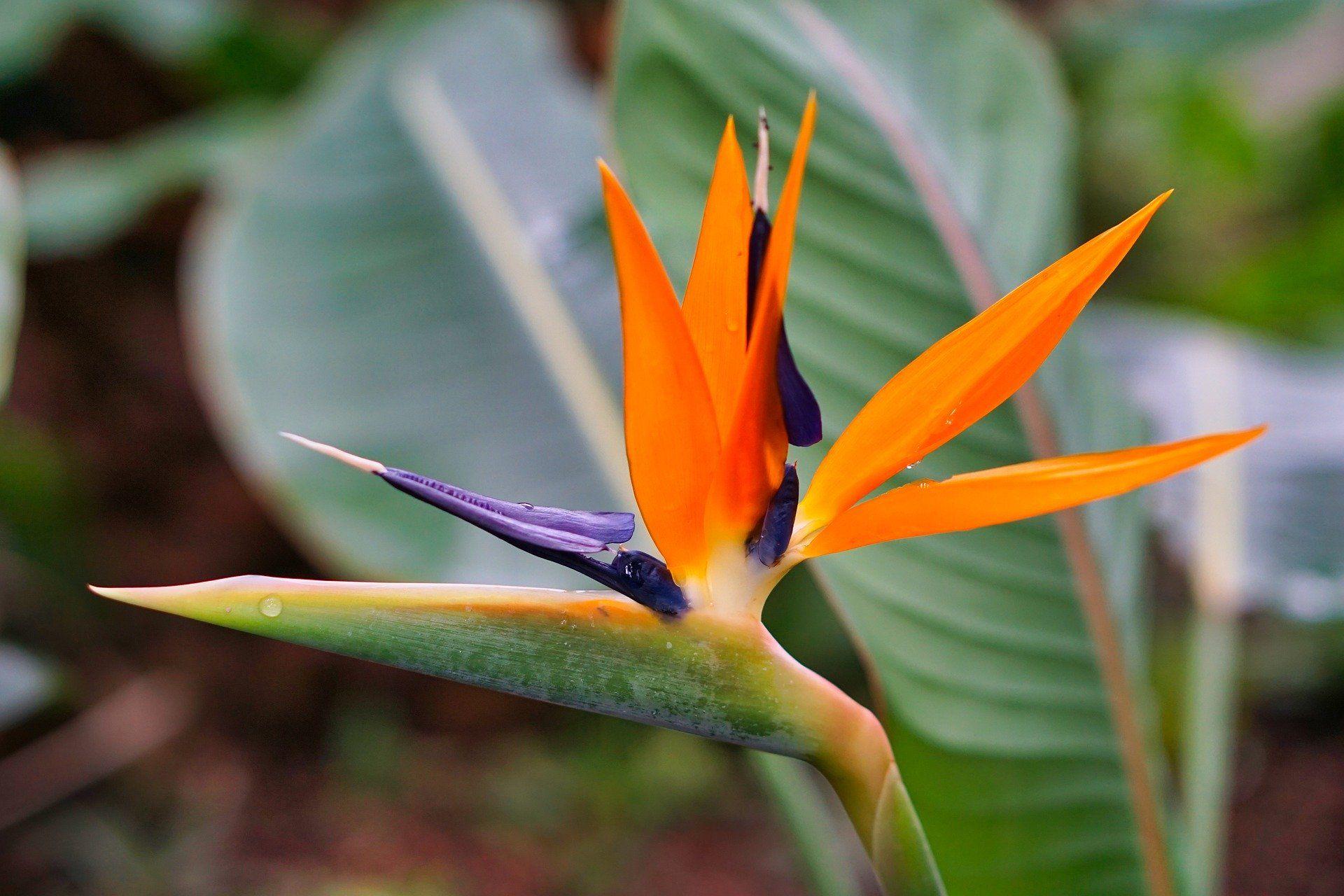 Смотреть фото райской птицы на нашем сайте