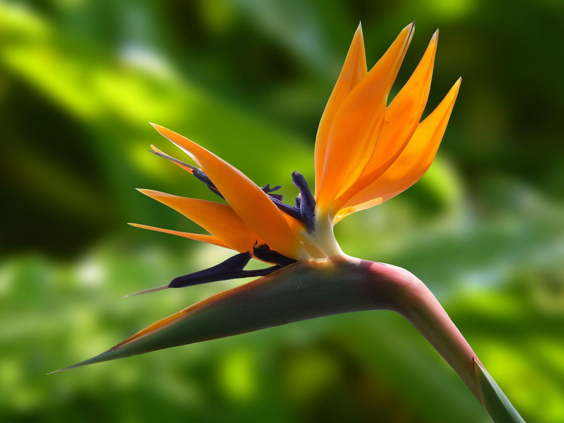 Онлайн просмотр фотографий райской птицы