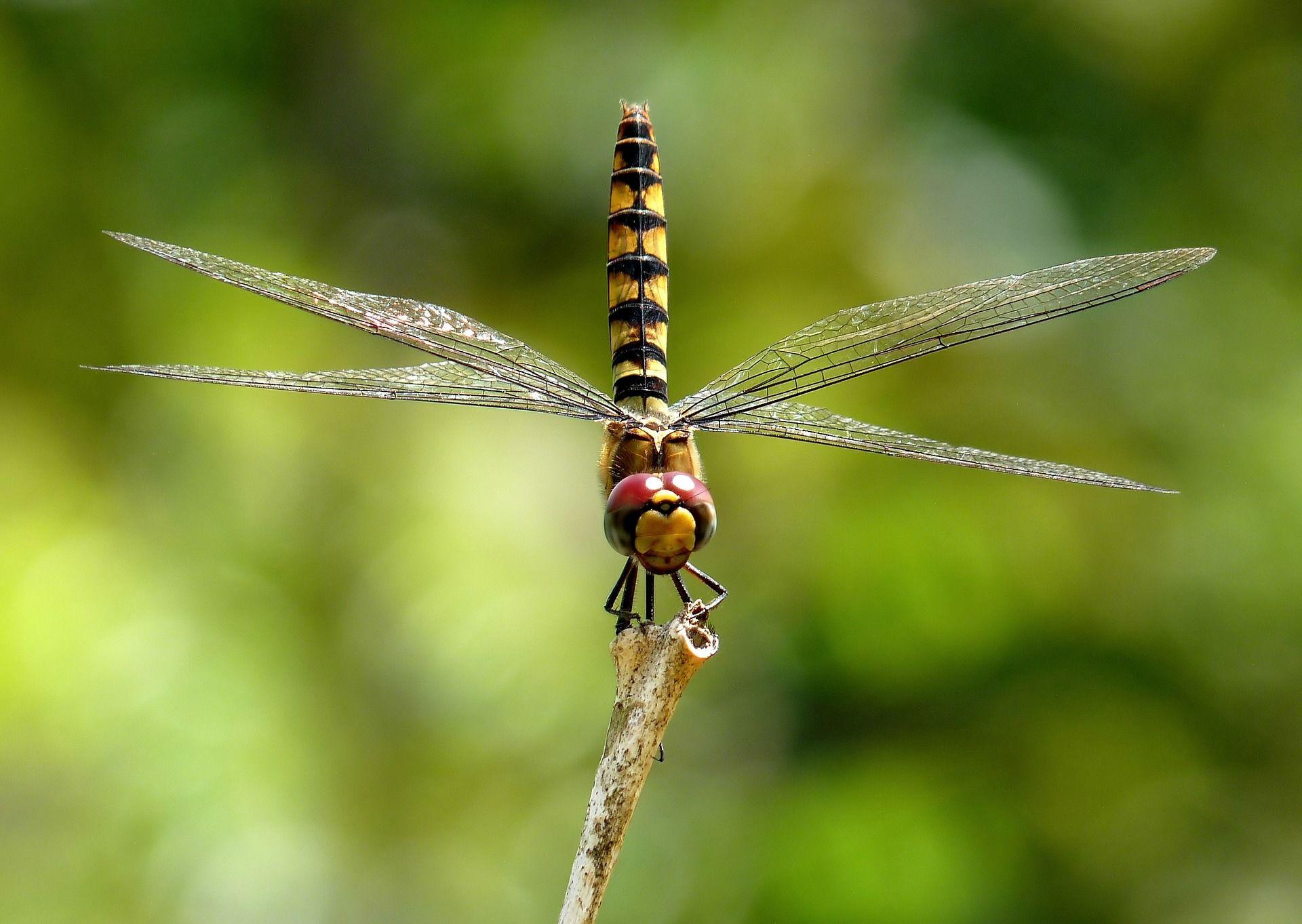 Смотреть фото стрекозы из г. Иркутск