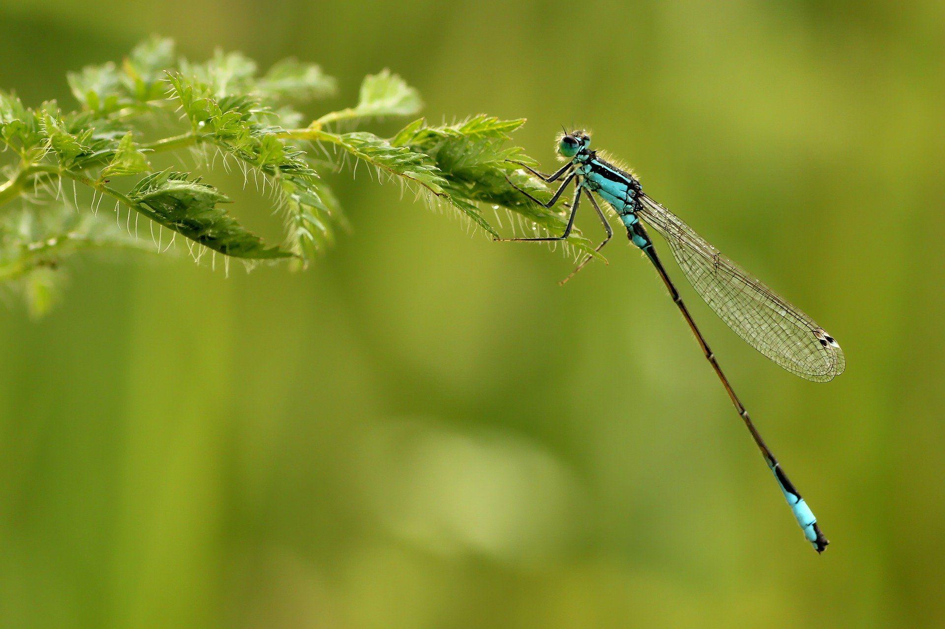 Смотреть картинки стрекозы онлайн