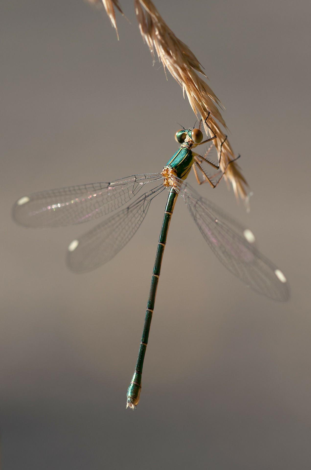Скачать фото стрекозы из интернета бесплатно