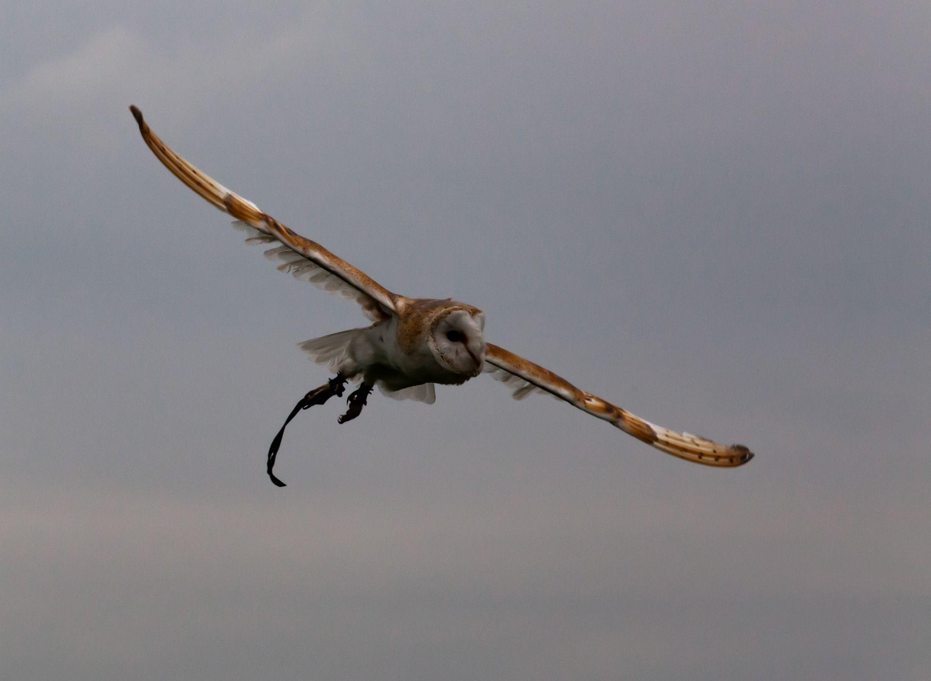 Смешные фото милых сов