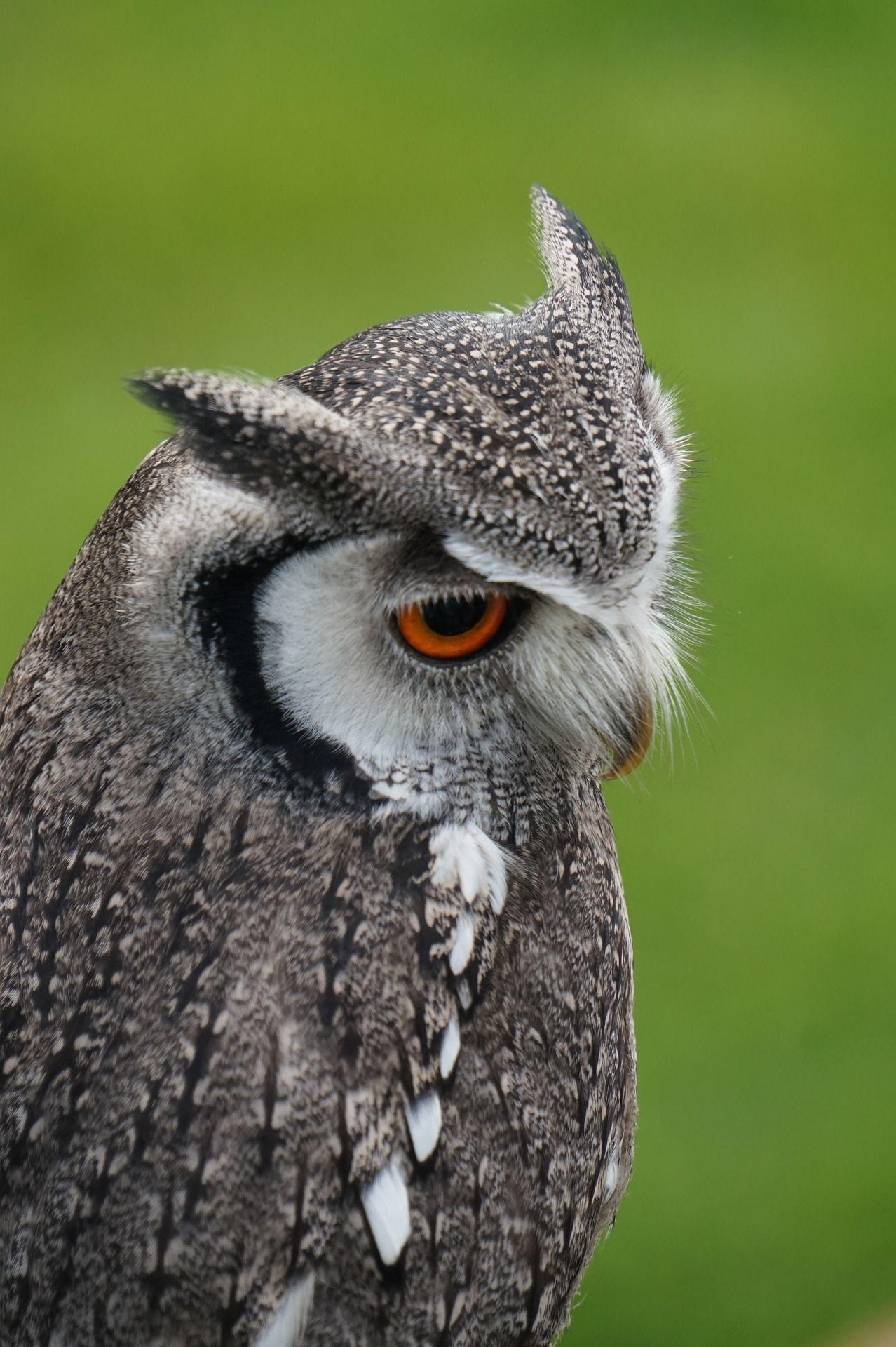 Смотреть фото мудрой совы бесплатно