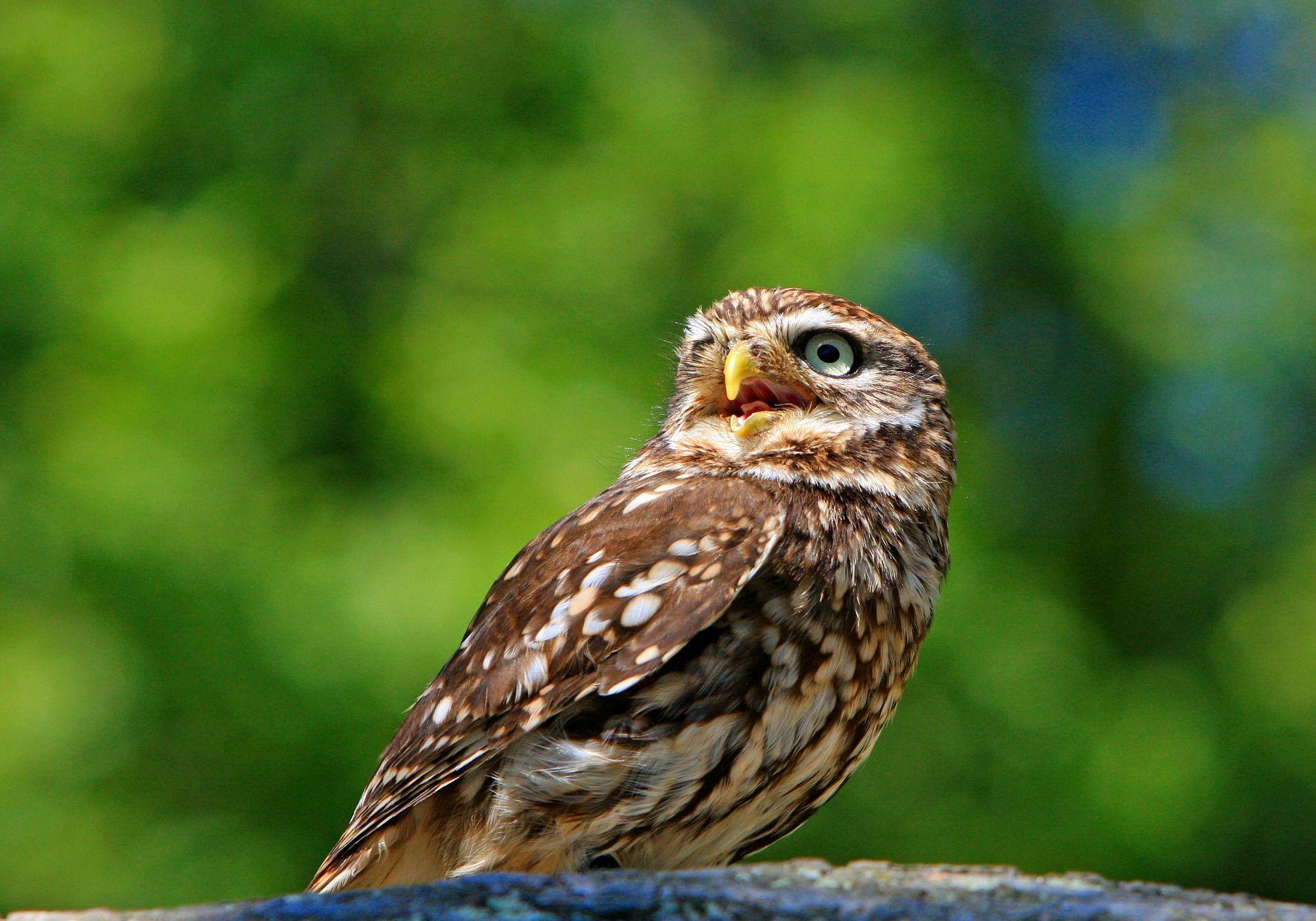 Лучшие фото мудрой совы бесплатно