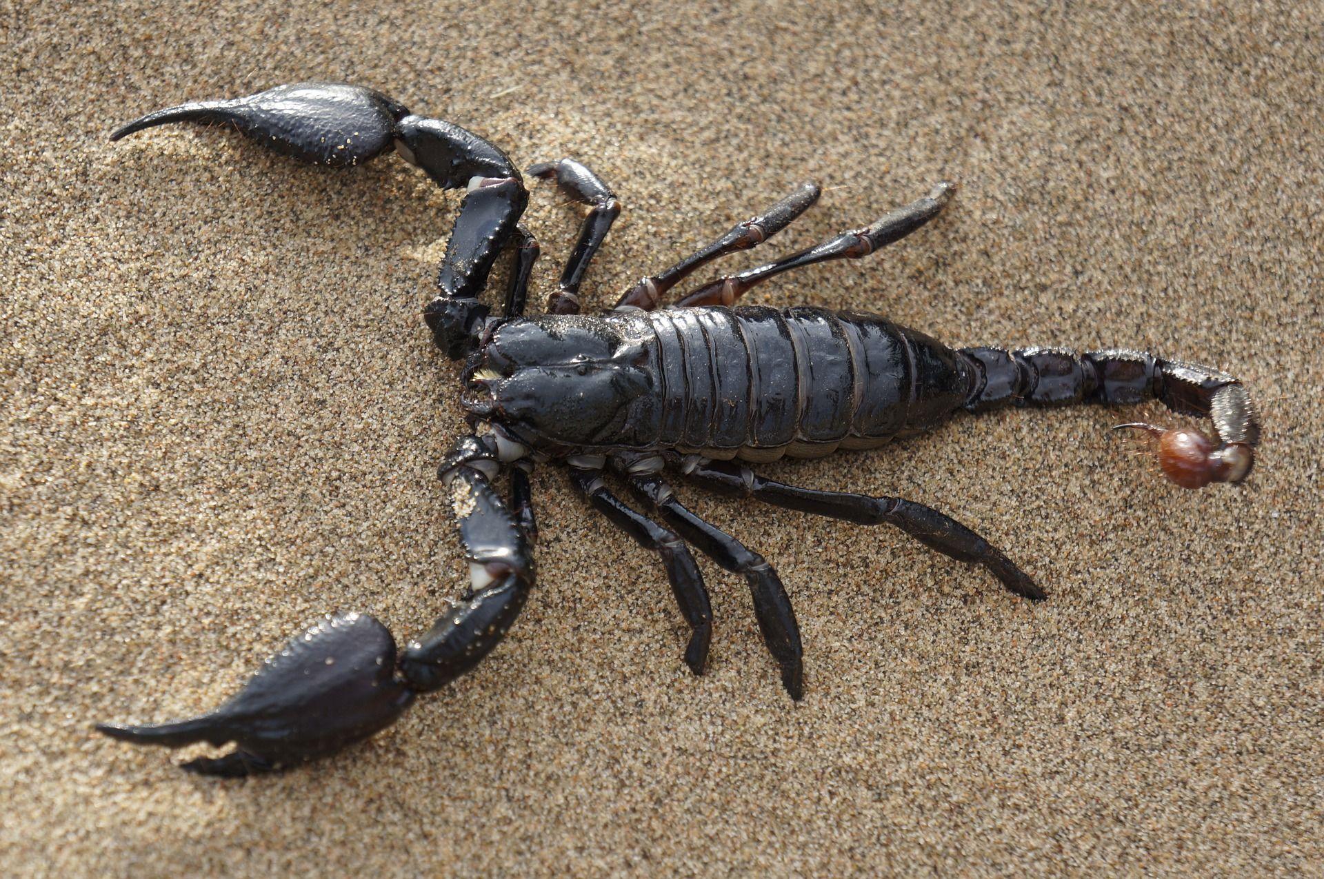 Лучшие картинки скорпиона онлайн