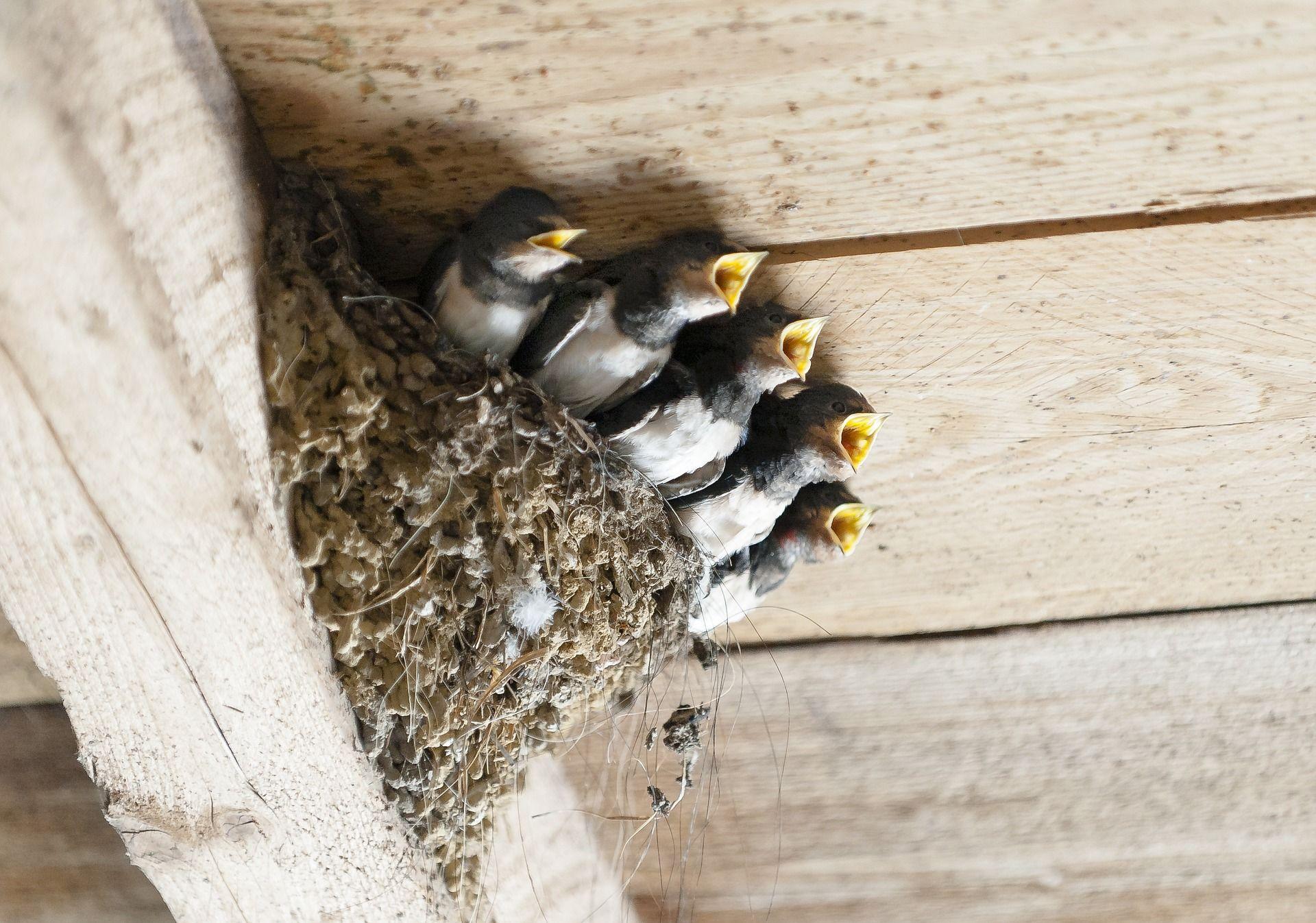 Смотреть интересное фото ласточек в домике