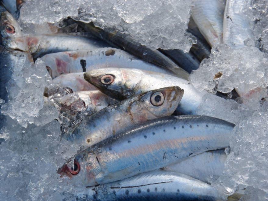 Фото рыбы сельди, к которой есть вкусные рецепты