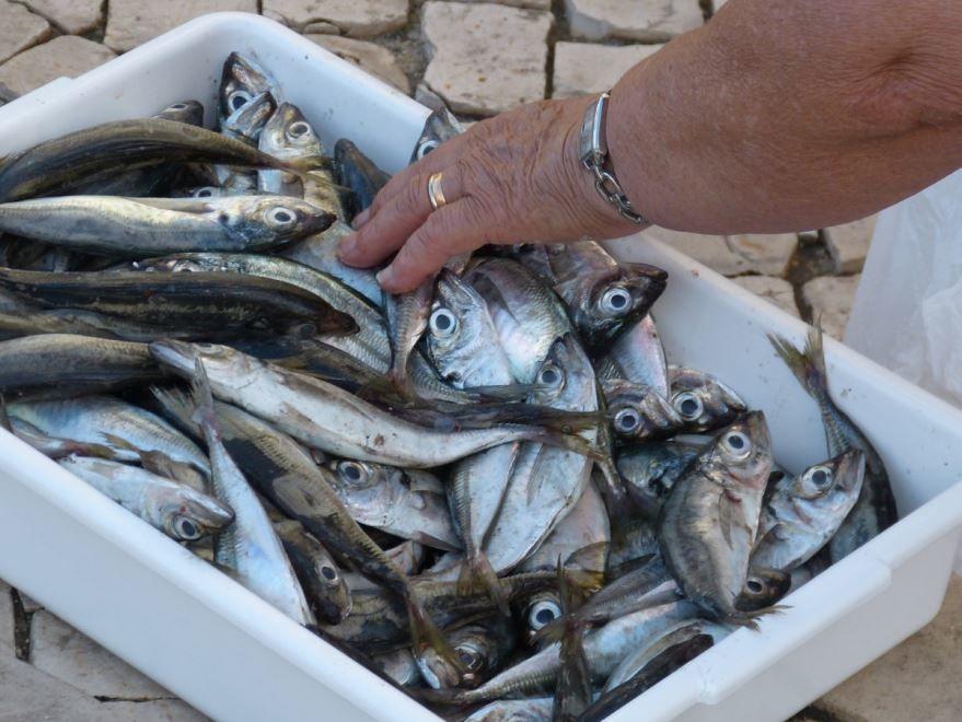 Картинки рыбы сельди бесплатно