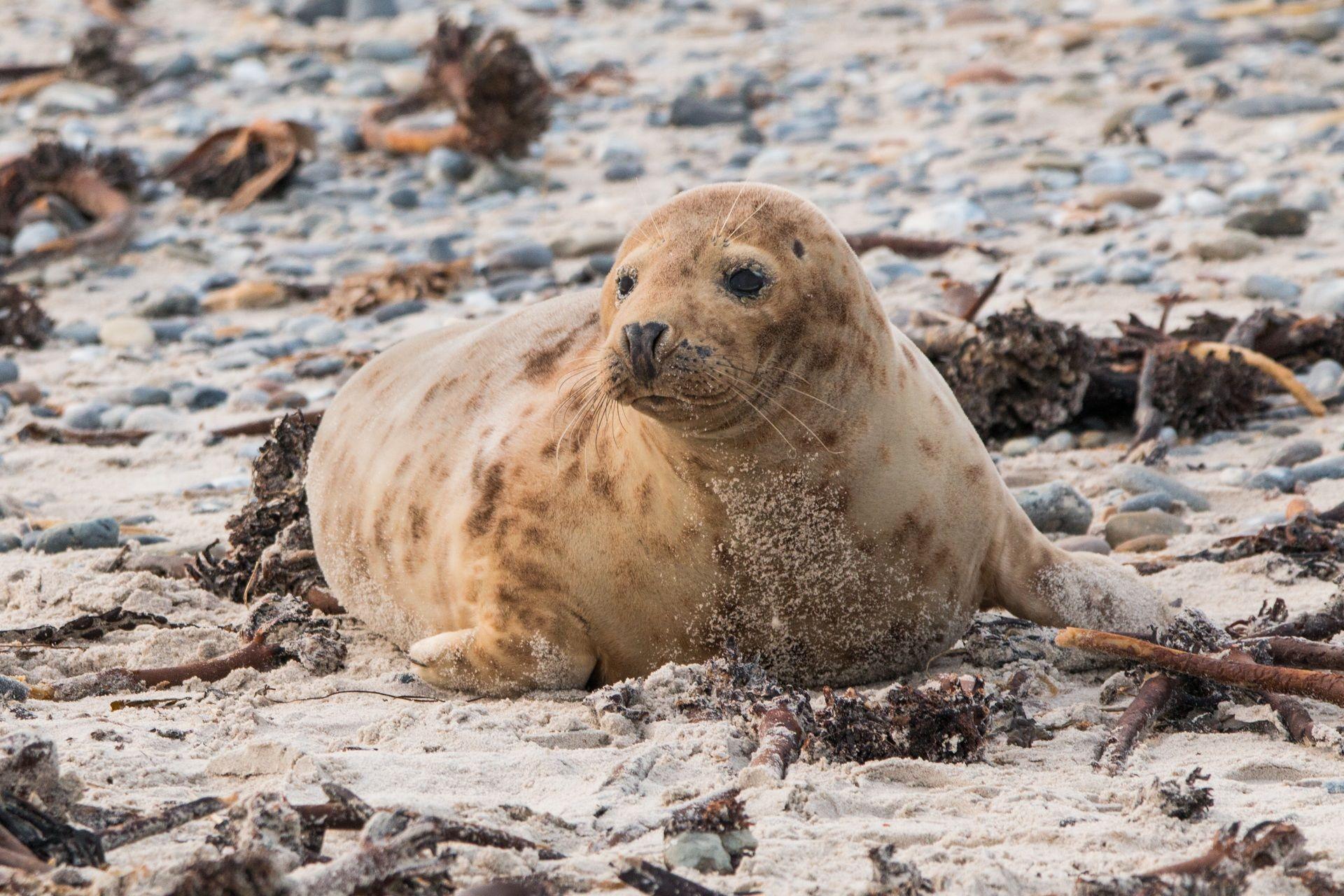 Смотреть фото животного тюленя онлайн