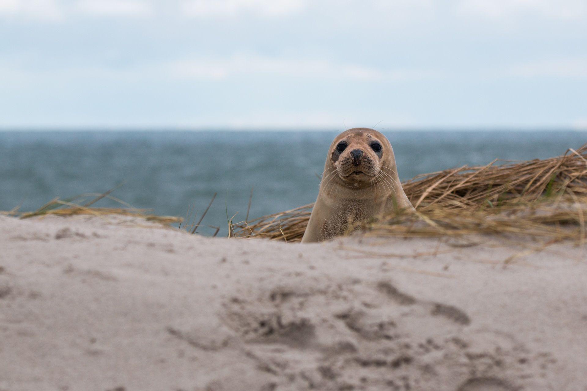 Скачать лучшие фото тюленя бесплатно