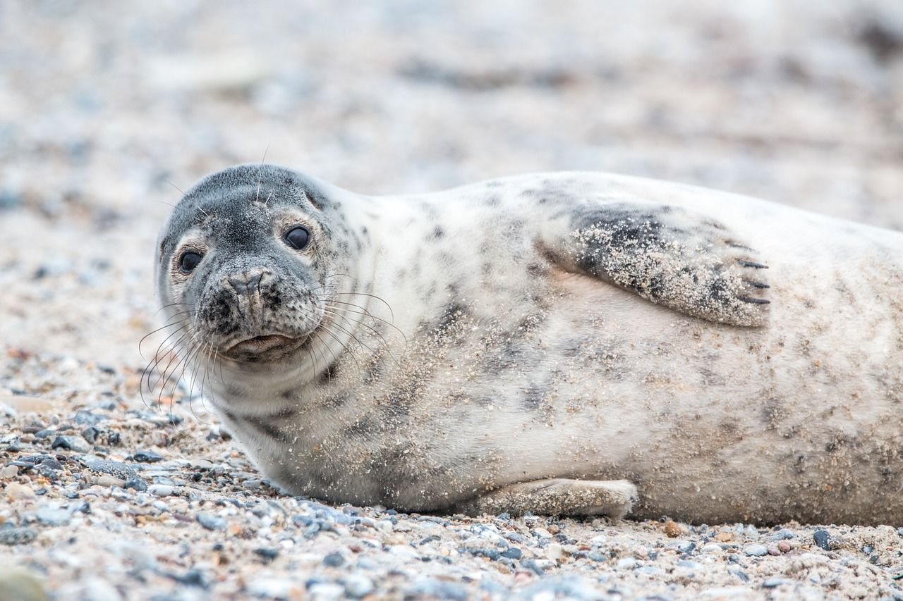 Лучшие фото тюленей в хорошем качестве