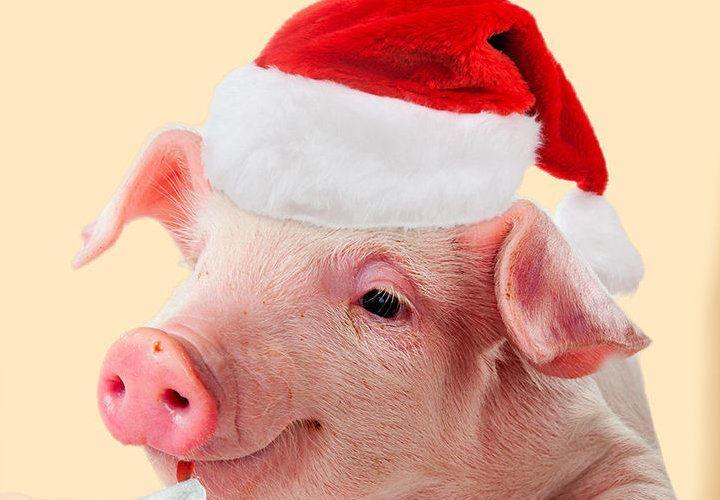 Новый год год Свиньи