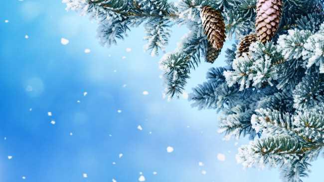 Елка с шишками на морозе со снегом