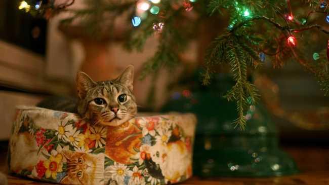 Кошка кот под елкой в подарке лежит