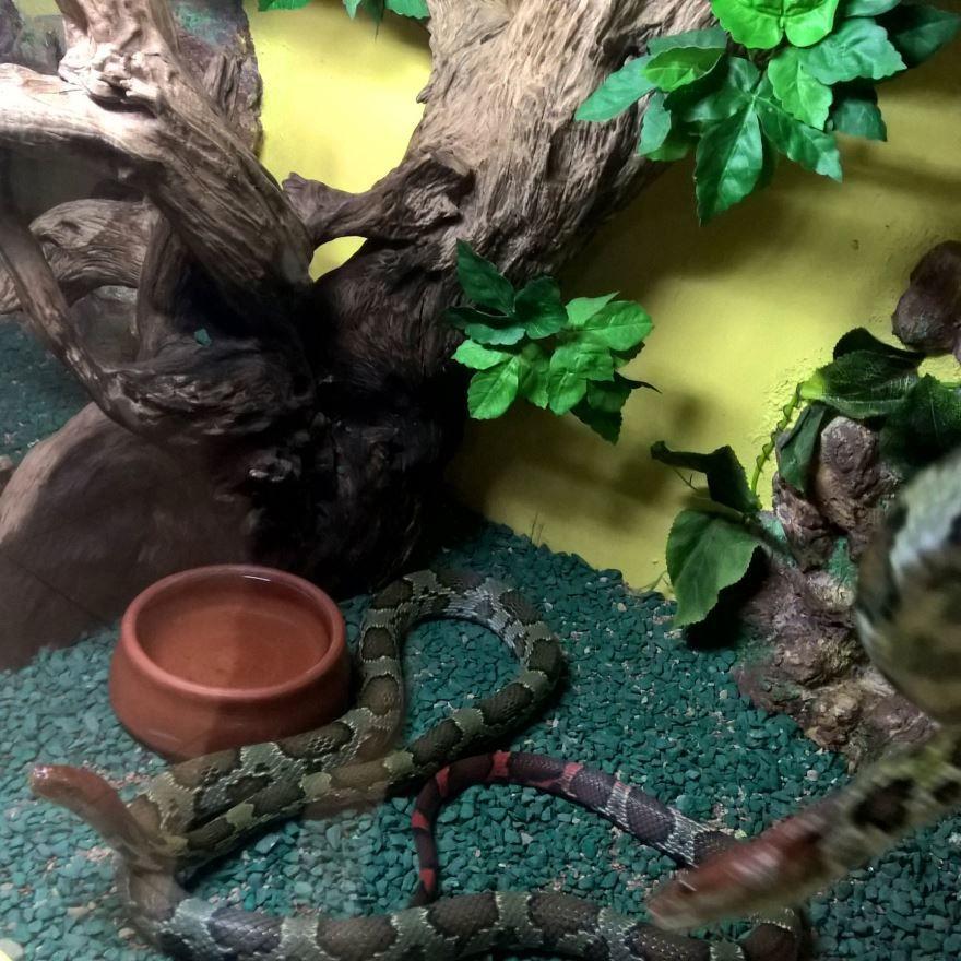Смотреть фотографии ядовитой змеи