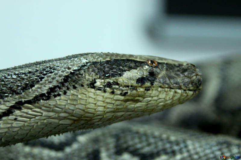 Смотреть фото змеи онлайн бесплатно