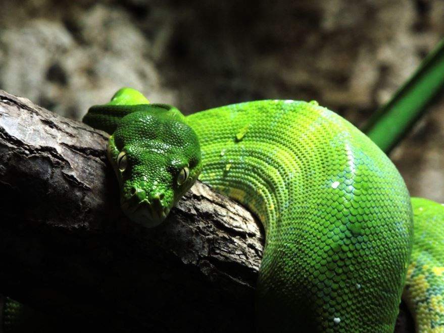 Купить фото змеи? Смотреть и скачать бесплатно