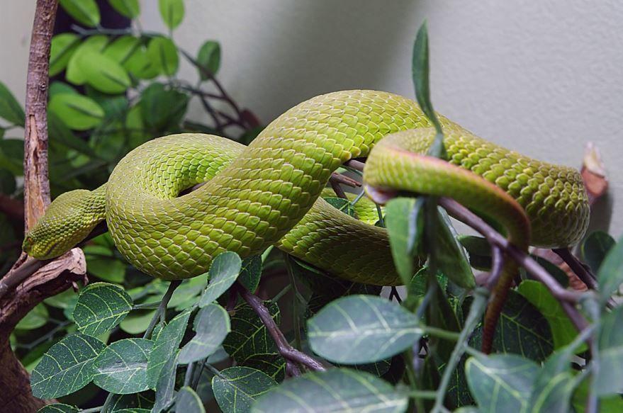 Скачать фото большой змеи