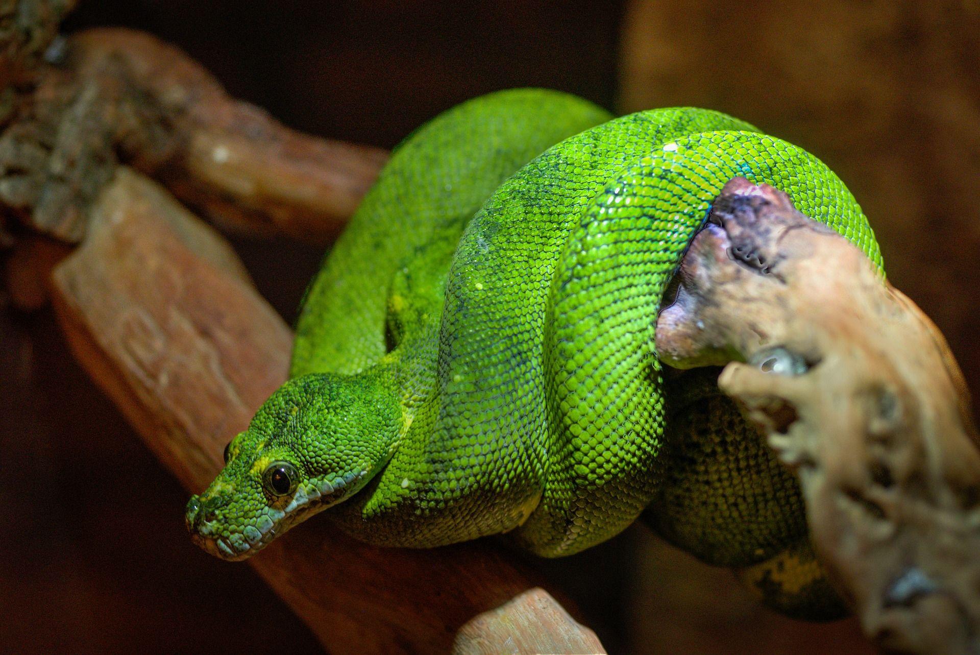 Фото змеи, укус которой может быть смертельным