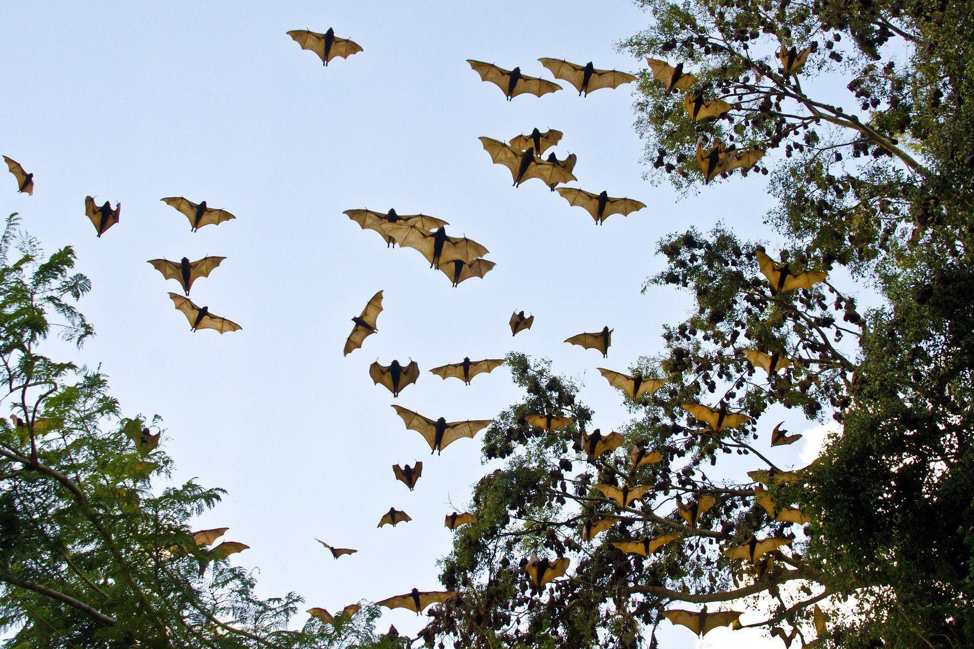 Скачать бесплатно оригинальное фото крылана в среде обитания