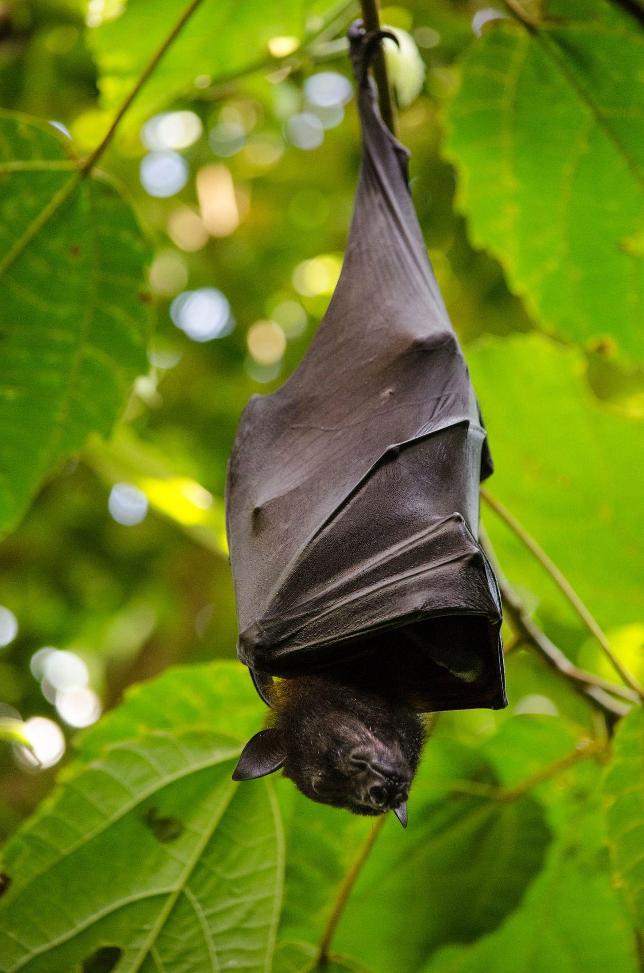 Смотреть красивую картинку крылан на природе