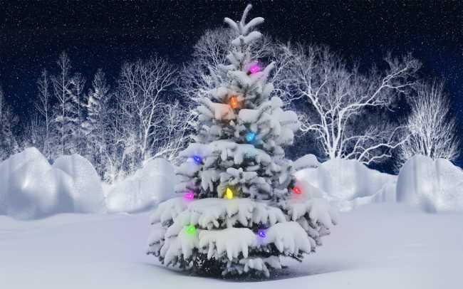 Ель с гирляндой, засыпана снегом