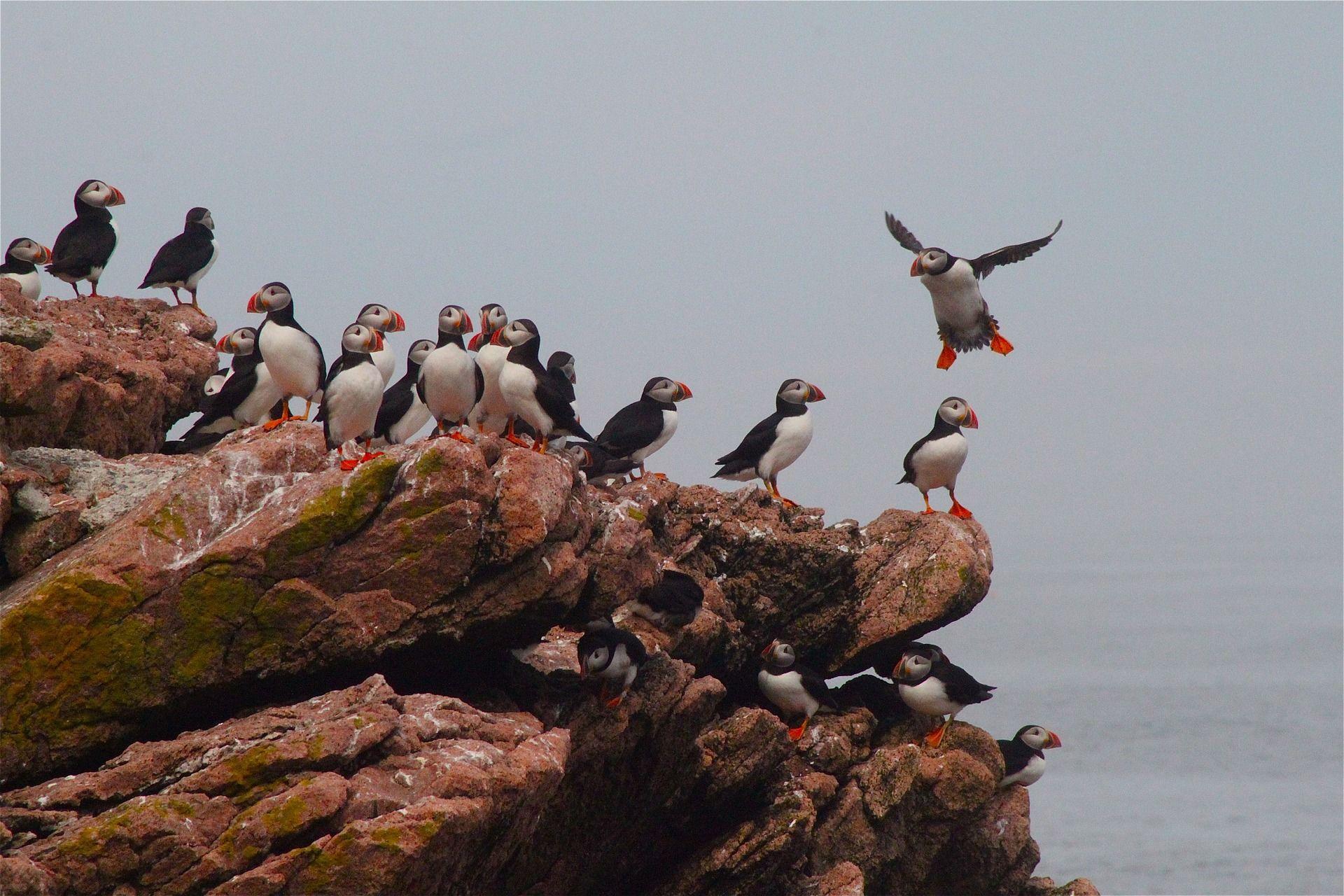 Смотреть фото птицы тупик онлайн