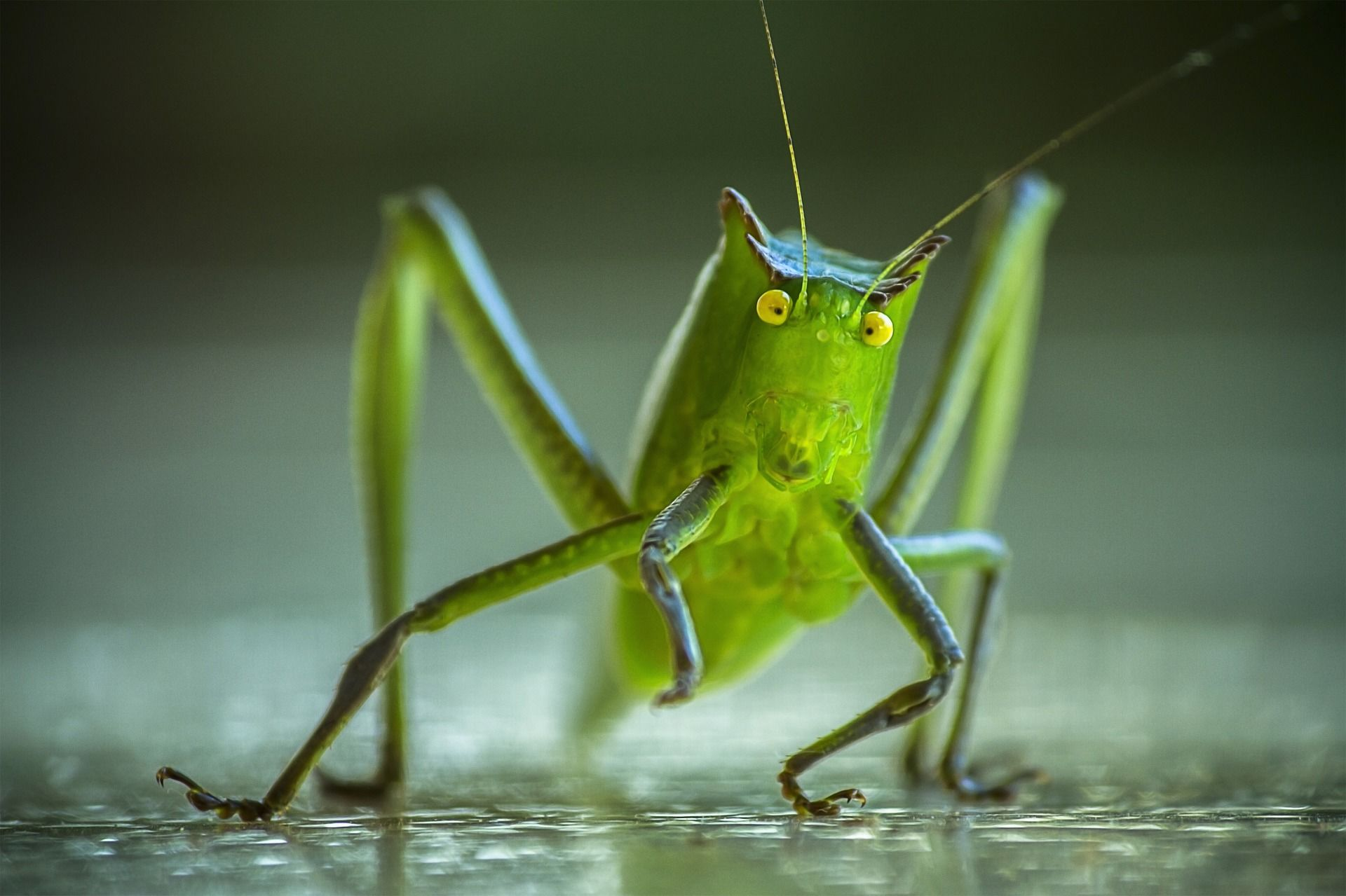 Смотреть красивое фото кузнечика на природе