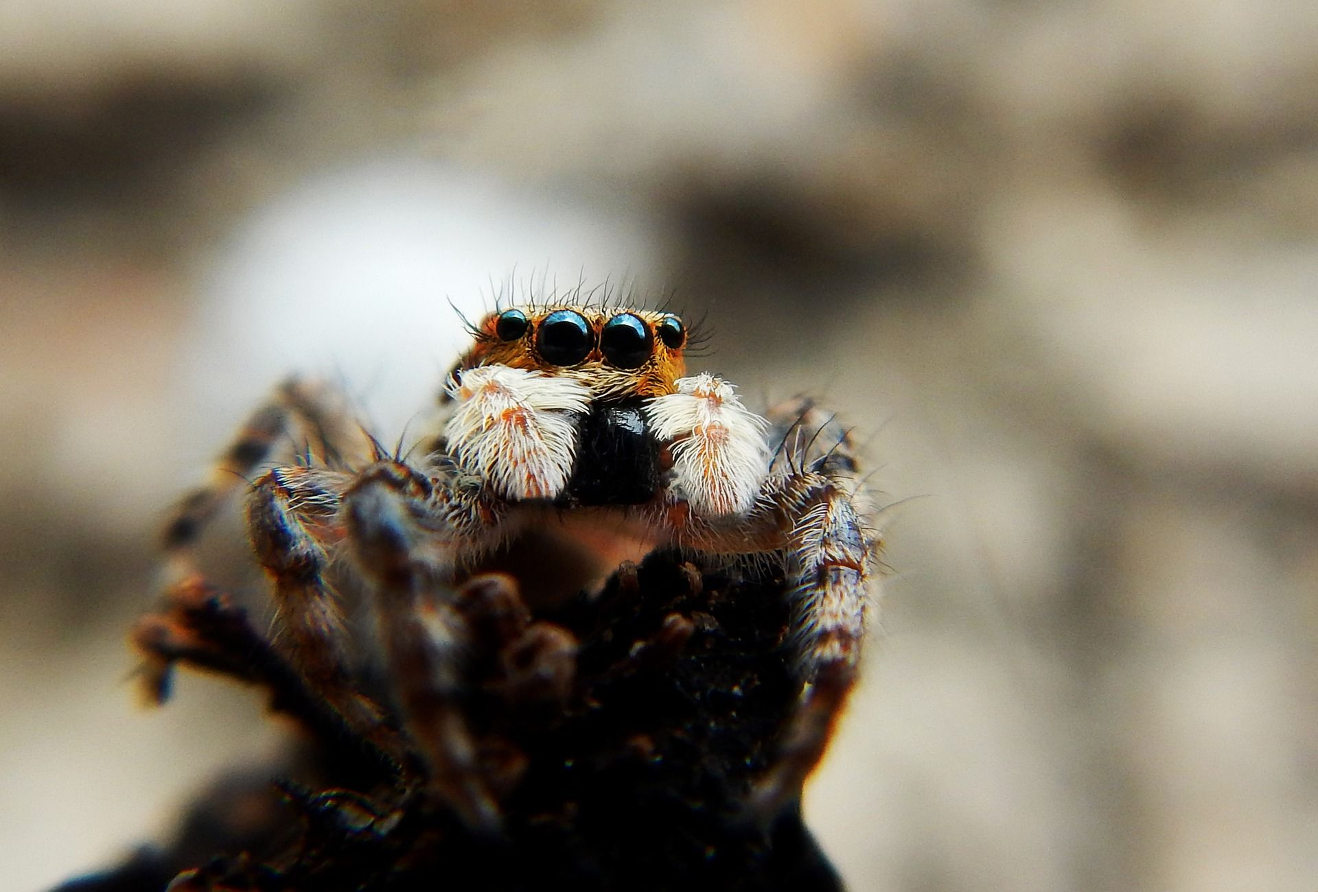 Скачать картинки и фото тарантула