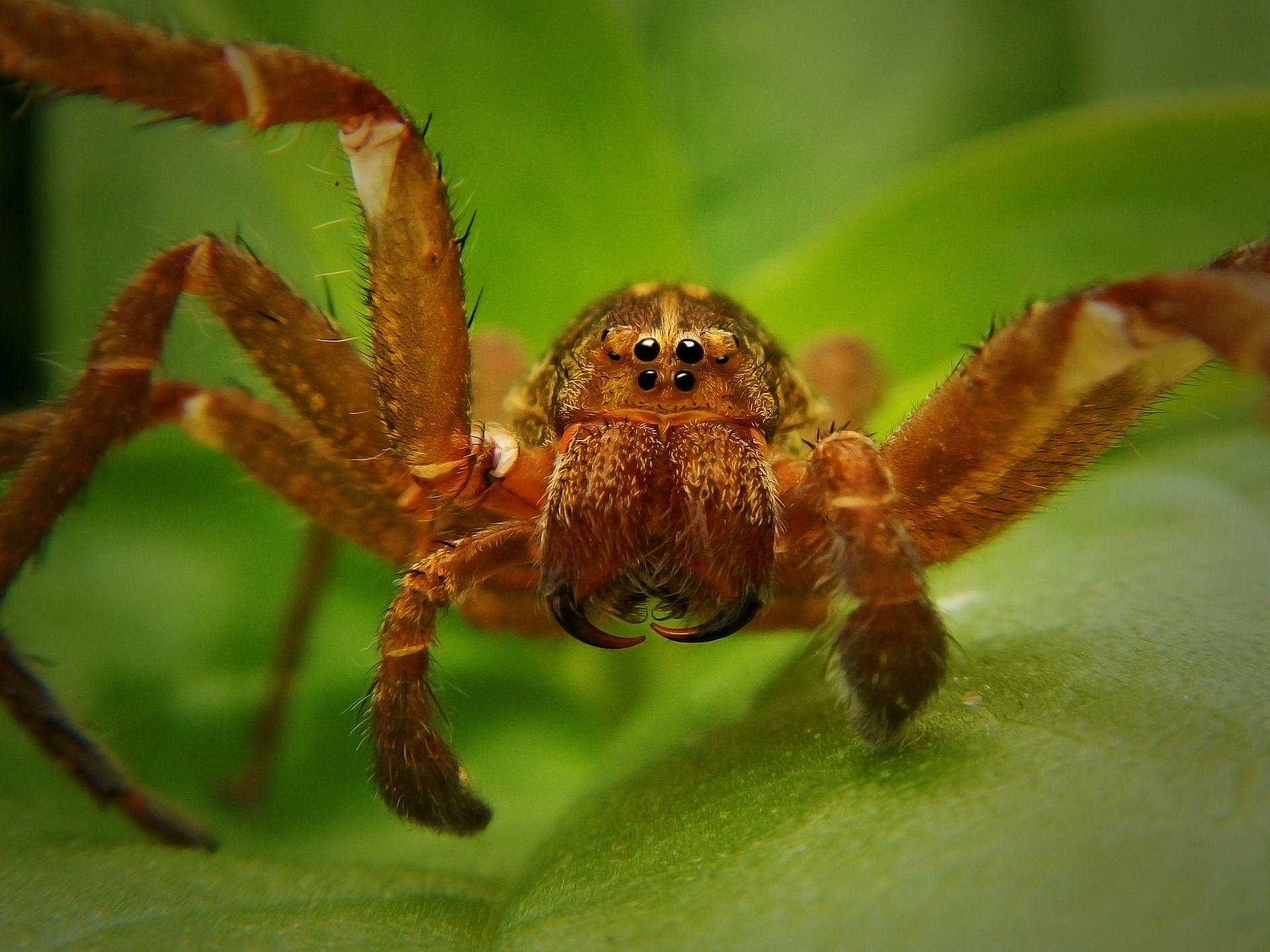 Смотреть фото паука тарантула бесплатно