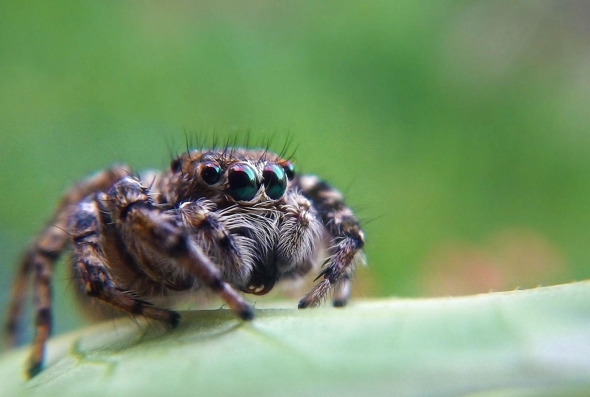 Фото южнорусского тарантула