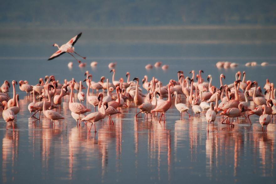 Лучшие фотографии фламинго, Адлер
