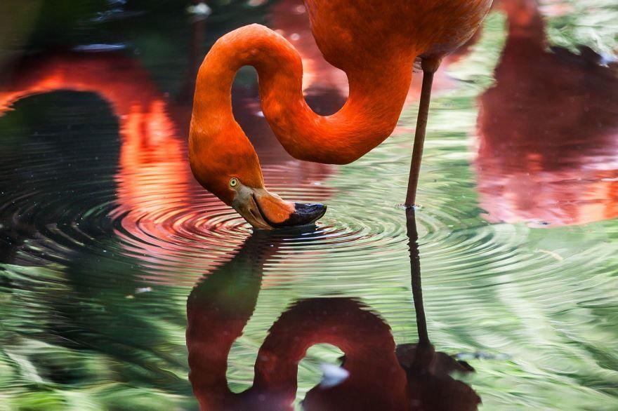 Скачать фото фламинго из г. Рязань