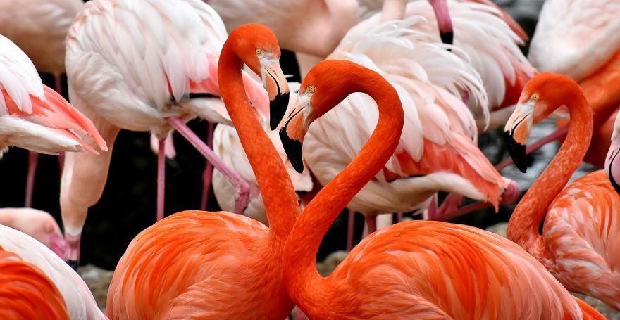 Смотреть фото розового фламинго онлайн