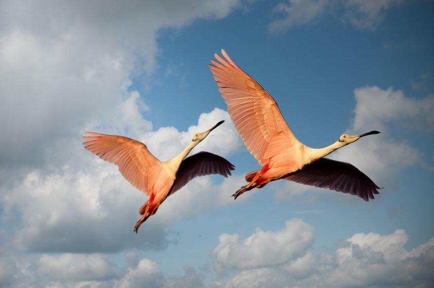 Купить красивые фото фламинго. Скачать бесплатно в хорошем качестве