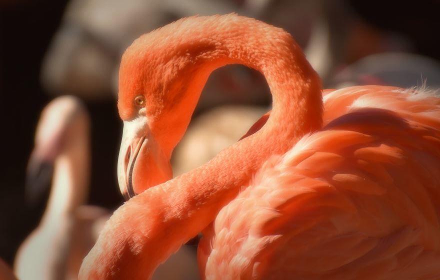 Онлайн просмотр картинок розового фламинго
