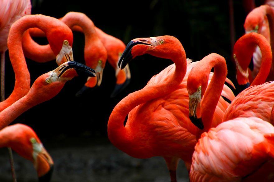 Смотреть фото розового фламинго для детей