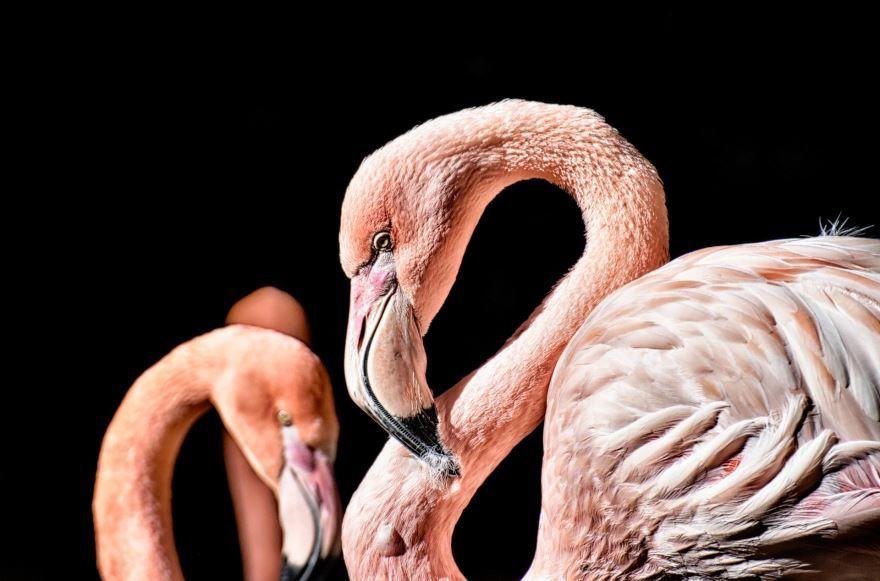 Бесплатные фото розового фламинго для скачивания